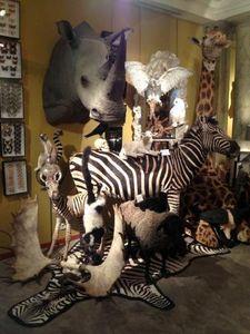 Design Et Nature Animal naturalisé