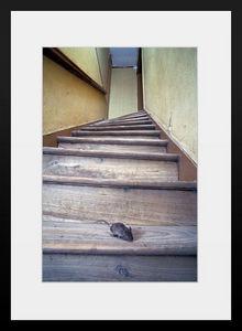 PHOTOBAY - la souris de l'escalier - Photographie