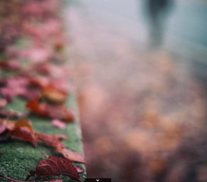 ALEX ARNAOUDOV - autumn morning - Photographie