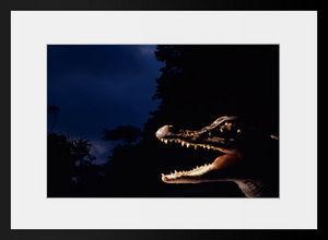 PHOTOBAY - les dents de la nuit - Photographie