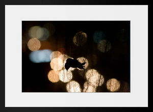 PHOTOBAY - trapped - Photographie