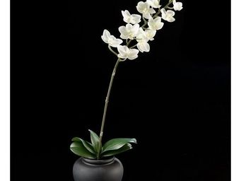 Deco Factory - phalaenopsis artificiel blanc en pot jess - Composition Florale