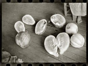 LINEATURE - melons on frank tengle's porch - 1936 - Photographie