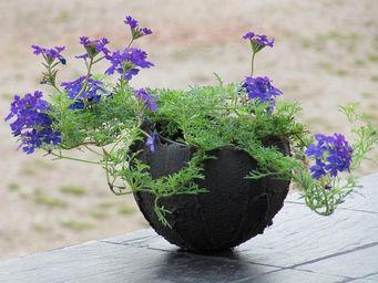 Le Trefle Bleu -  - Cache Pot
