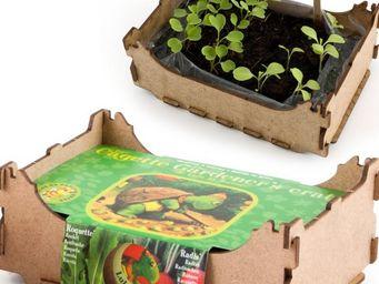 Radis Et Capucine - radis et roquette à semer dans leur cagette de lég - Potager D'intérieur