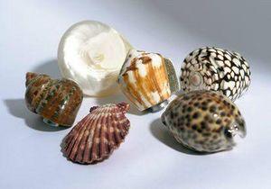 L'Univers de La Poignee - coquillages - Bouton De Meuble Et De Placard