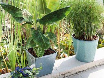 DEROMA France - sedna - Pot De Fleur