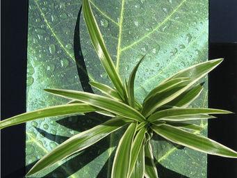 LES JARDINS DE CHLOE - nature - Tableau Végétal