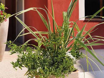 DEROMA France - vase marengo assorti 38xh36cm - Pot De Jardin