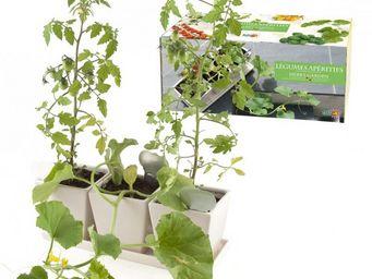 Radis Et Capucine - pots de cultures légumes apéritifs - Potager D'intérieur