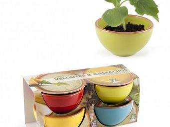 Radis Et Capucine - ensemble de bols pour la soupe et légumes à faire  - Potager D'intérieur