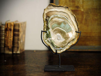 Objet de Curiosite - tranche de bois fossile vert (type huitre) - Fossile