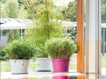 DEROMA France - maxxi fun day - Pot De Jardin