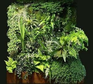 Patrick Blanc -  - Mur Végétalisé