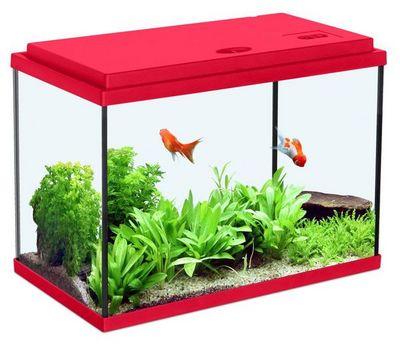 ZOLUX - Aquarium-ZOLUX-Aquarium enfant rouge cerise 18L