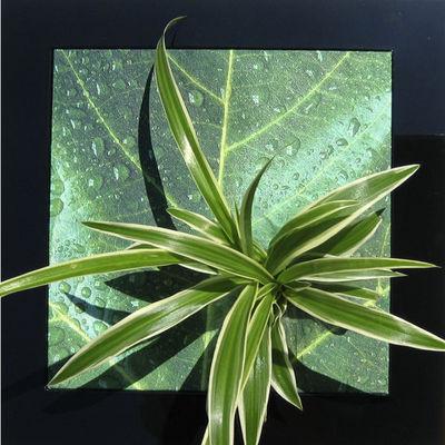 LES JARDINS DE CHLOE - Tableau végétal-LES JARDINS DE CHLOE-NATURE