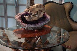 ANNSUS -TAKE A LOOK * FOSSIL-ART -  - Decorative Skull