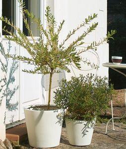 amei -  - Tree Pot