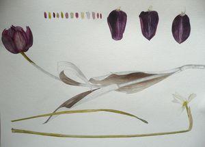 PEINTURE BOTANIQUE -  - Decorative Painting