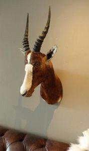 DE MUSEUM WINKEL.COM -  - Hunting Trophy