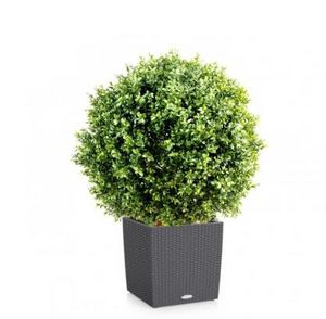 FLORE EVENTS - buis - Artificial Tree