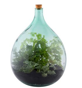 Esschert Design -  - Terrarium Garden Under Glass