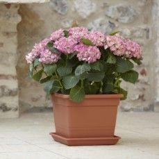 Nicoli - vaso quadro - Flower Box