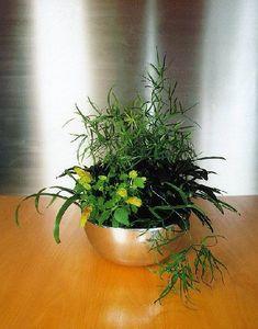 Natürliche Zimmerpflanze