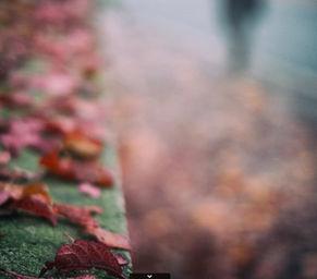 ALEX ARNAOUDOV - autumn morning - Fotografie