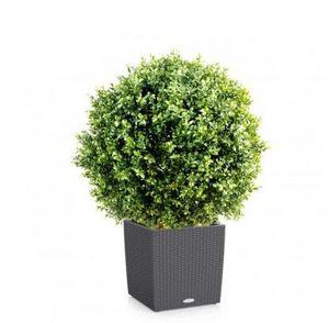 FLORE EVENTS - buis - Künstlicher Baum