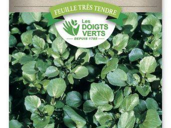 LES DOIGTS VERTS - semence cresson de fontaine à large feuille - Saatgut