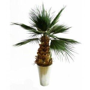Infinie Nature -  - Stabilisierter Pflanze