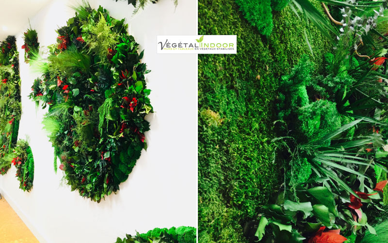 Vegetal  Indoor Pared vegetalizada Árboles & plantas Flores y Fragancias  |