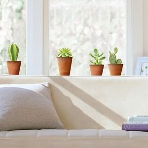Nouvelles Images - stickers nature-les cactus - Adhesivo
