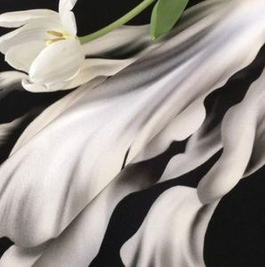 ELLIE - tulipe noire - Tela Al Metro