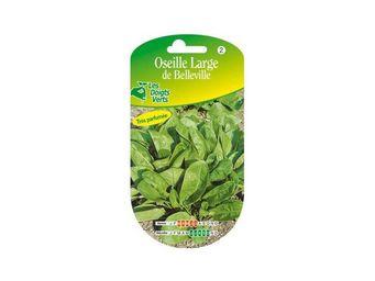 LES DOIGTS VERTS - semence oseille large de belleville - Semilla