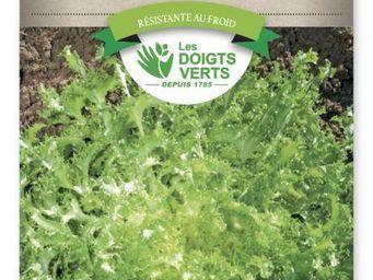 LES DOIGTS VERTS - semence chicorée frisée wallonne - Semilla