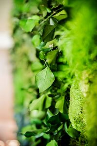 GREENAREA -  - Pared Vegetalizada