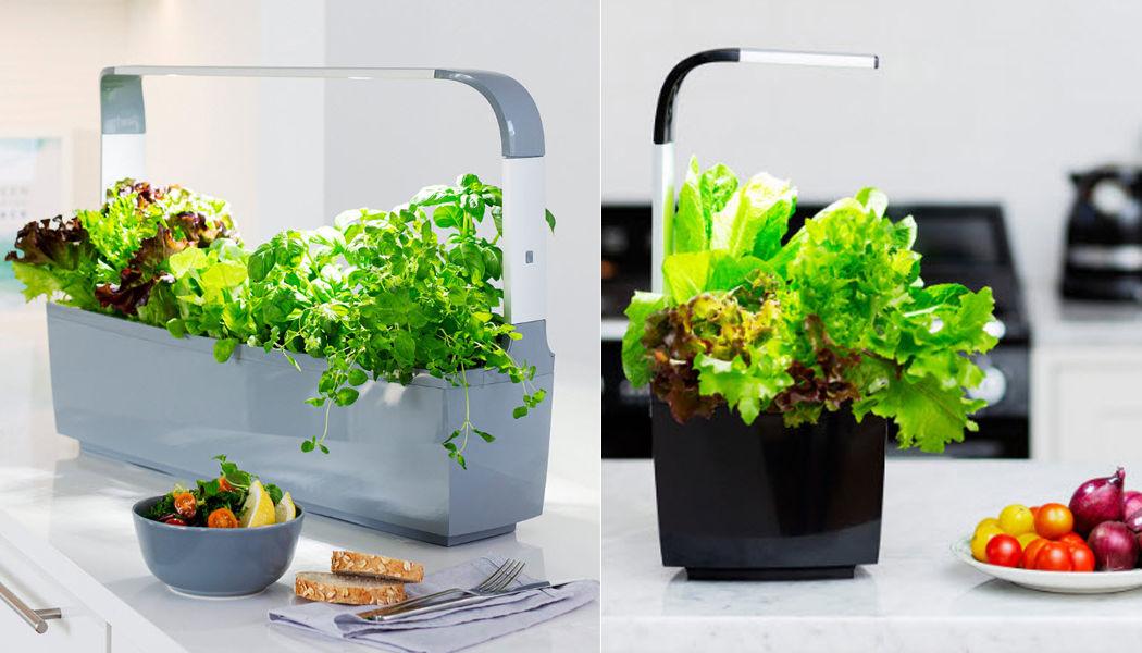 TREGREN Giardino per interni Alberi e piante Fiori e Profumi  |