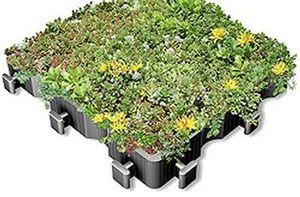 Ecovegetal Lastra vegetalizzata