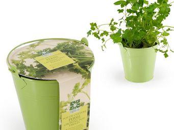 Radis Et Capucine - son pot de persil pour la cuisine et le balcon - Giardino Per Interni
