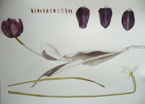 PEINTURE BOTANIQUE -  - Quadro Decorativo