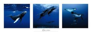 Nouvelles Images - affiche baleines à bosse polynésie française - Poster